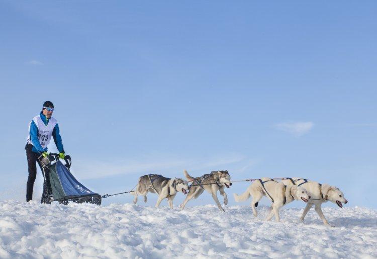 Piste d'entraînement pour chiens de traineaux