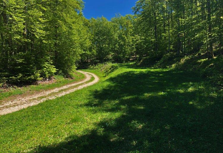 Circuit de randonnée de la Ronde des Plans